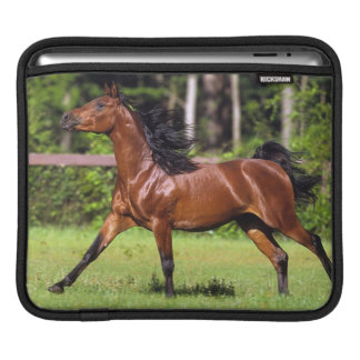 Arabiskt hästspring 2 iPad sleeve