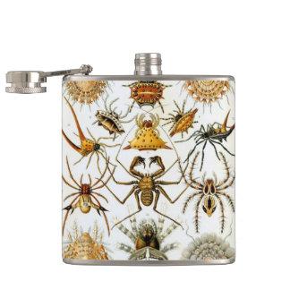 Arachnids av Ernst Haeckel, vintagespindlar Fickplunta