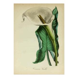 Arbeta i trädgården för blomma för vintageCallalil Set Av Breda Visitkort