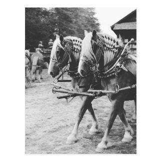 Arbetet formulerar hästar i svartvitt vykort