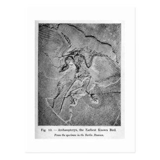 Archaeopteryxkonstvykort Vykort