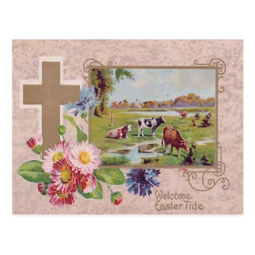 Arg daisykohage för kristen vykort