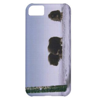 Arktisk konst för djurliv för för Muskoxar & iPhone 5C Fodral