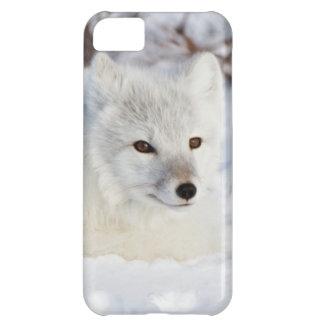 Arktisk räv i vinter iPhone 5C fodral
