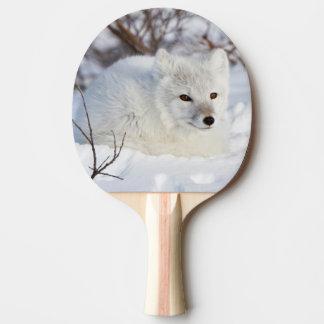 Arktisk räv i vinter pingisracket