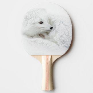 Arktisk räv som krullas upp i vinter pingisracket