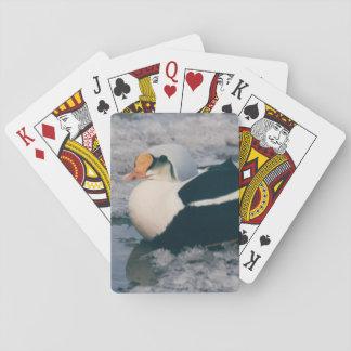 Arktiskt däck för design för foto för fågel för casinokort