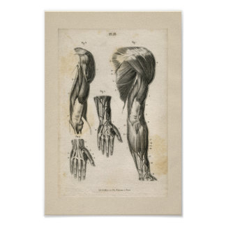 Armen tränga sig in vintageanatomitrycket poster