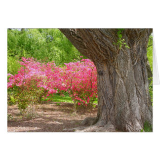 Arnold Arboretum i vår Hälsningskort
