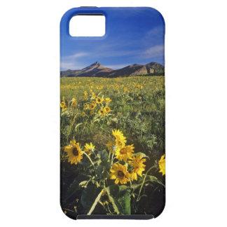 Arrowleaf balsomrootvildblommar i Waterton 2 iPhone 5 Hud