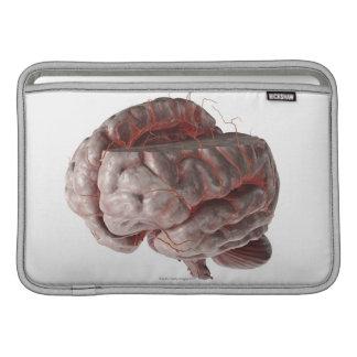 Artärer av hjärnan 3 MacBook sleeves