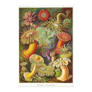 Artforms av naturen #49 kanvasduk med gallerikvalitet