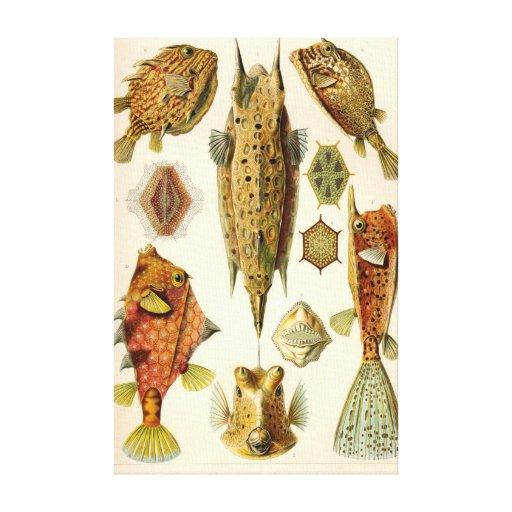 Artforms i naturen #42 kanvasdukar med gallerikvalitet