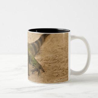 Aruba ödla på sanden Två-Tonad mugg