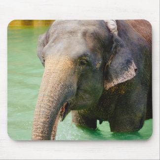 Asiatisk elefant i grönt vatten, djurt foto musmatta