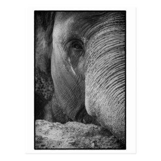 Asiatisk elefantansiktevykort vykort