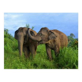 Asiatiska elefanter vykort