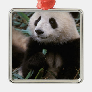 Asien china, Chengdu. Jätte- Pandafristad - Julgransprydnad Metall