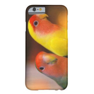Asien china, Hong Kong. Yuen Po gatafågel Barely There iPhone 6 Fodral