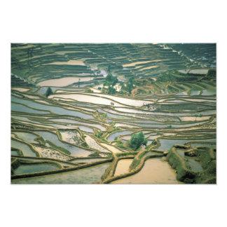 Asien china. Översvämmat ris terrasserar nära Nano Fototryck