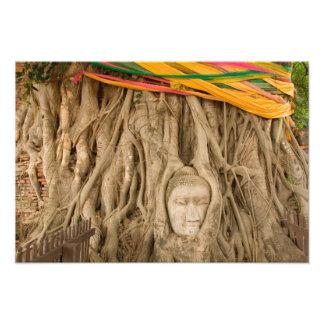 Asien Thailand, Siam, Buddha i trädbrunst på Fototryck