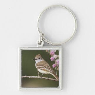 Aska-throated Flycatcher, Myiarchus Fyrkantig Silverfärgad Nyckelring