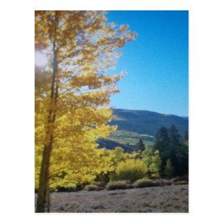 Asp- solsken vykort