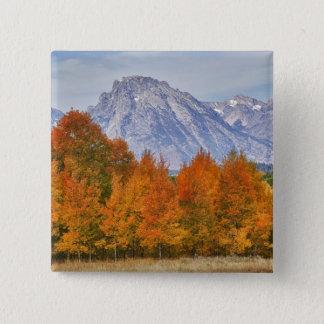 Asp- träd med den Teton bergskedjan 5 Standard Kanpp Fyrkantig 5.1 Cm