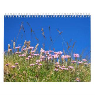 Aster Alpinus Kalender
