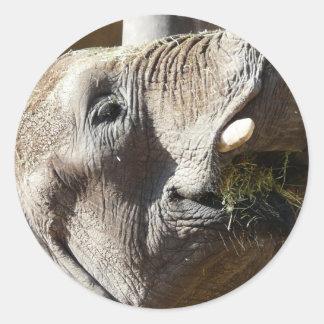äta för elefant runt klistermärke