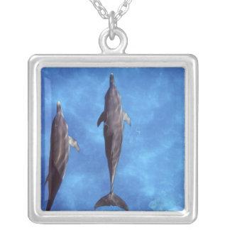 Atlantiska prickiga delfiner. Bimini Bahamas. 3 Silverpläterat Halsband