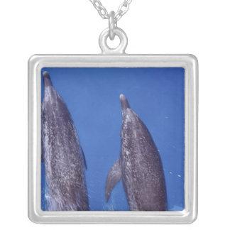 Atlantiska prickiga delfiner. Bimini Bahamas. 4 Silverpläterat Halsband