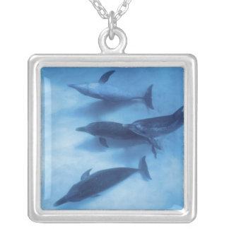 Atlantiska prickiga delfiner. Bimini Bahamas. 7 Silverpläterat Halsband