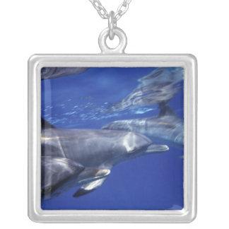 Atlantiska prickiga delfiner. Bimini Bahamas. 9 Silverpläterat Halsband