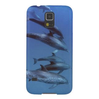 Atlantiska prickiga delfiner. Bimini Bahamas. Galaxy S5 Fodral