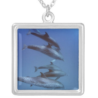 Atlantiska prickiga delfiner. Bimini Bahamas. Silverpläterat Halsband