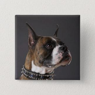 Att ha på sig för hund förser med krage, tittar bo standard kanpp fyrkantig 5.1 cm