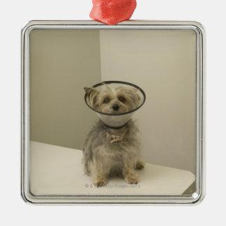 Att ha på sig för Terrierhund som är skyddande, Julgransprydnad Metall
