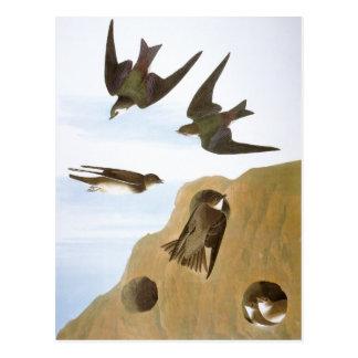 Audubon: Svalor Vykort