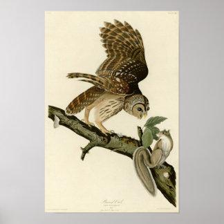 Audubons bommade för uggla poster