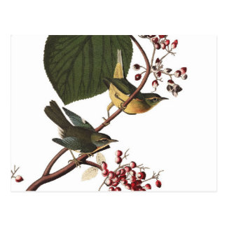 Audubons extra sångare vykort