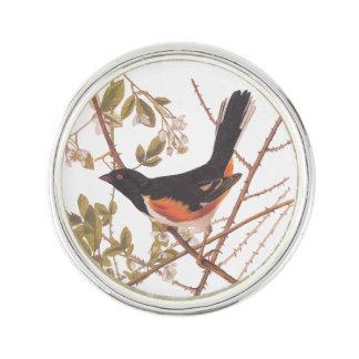 Audubons fågeln för Towee Bunting parar i taggiga Rockslagsnål