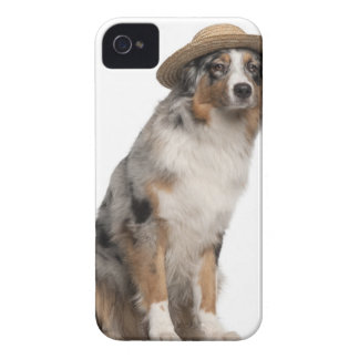 Australian shepherd (10 gammala månader) som ha på Case-Mate iPhone 4 fodral