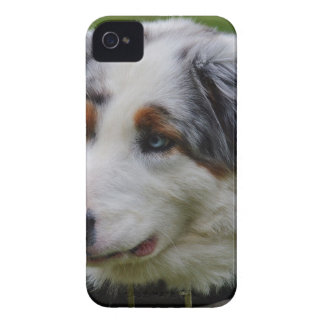 Australian shepherd Case-Mate iPhone 4 skydd