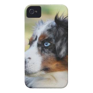 australian shepherd iPhone 4 skydd