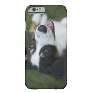 Australian shepherdanseende på hind ben barely there iPhone 6 skal