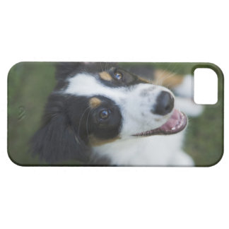 Australian shepherdanseende på hind ben iPhone 5 cases
