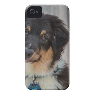 Australian shepherdhund iPhone 4 skal