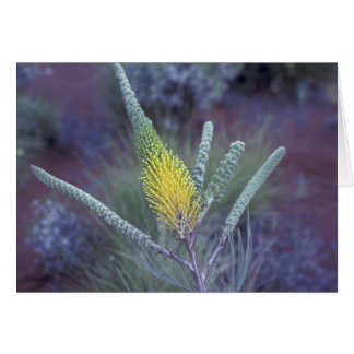 Australien NT, nära Ayers sten. Springtimeblom Hälsningskort