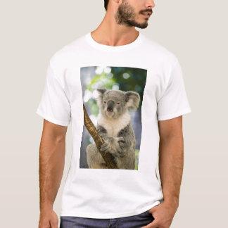 Australien Queensland, Brisbane, Figträd Tee Shirts